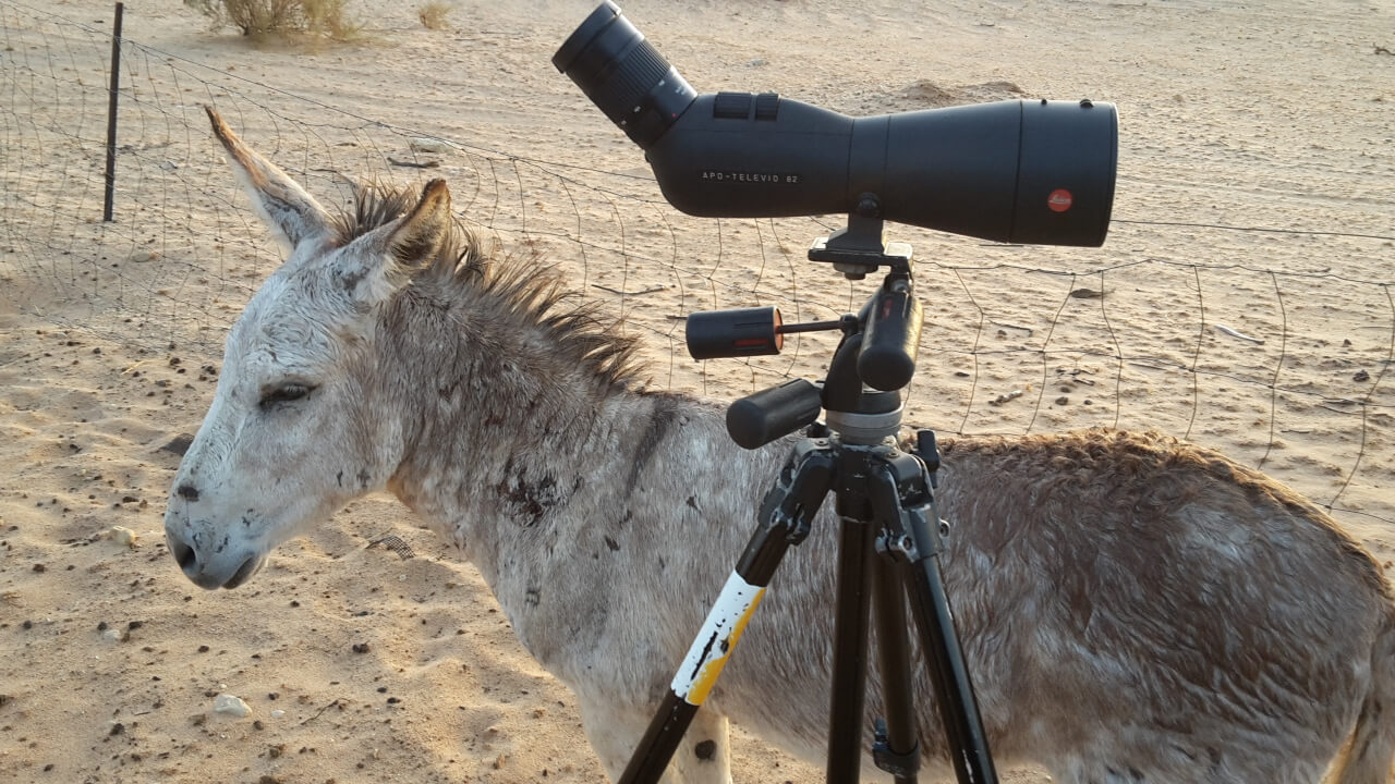 Even a Donkey recognizes quality when he sees it - Copyright Martijn Verdoes